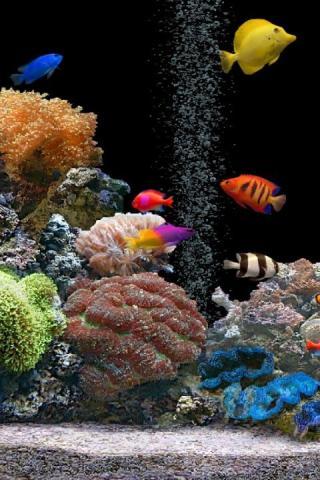 Красивые обои рыбки для заставки вашего телефона - подборка 8