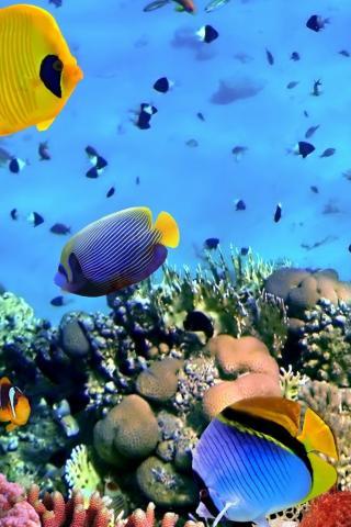 Красивые обои рыбки для заставки вашего телефона - подборка 9