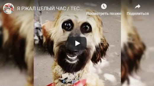 Лучшие видео приколы с животными до слез - подборка за октябрь