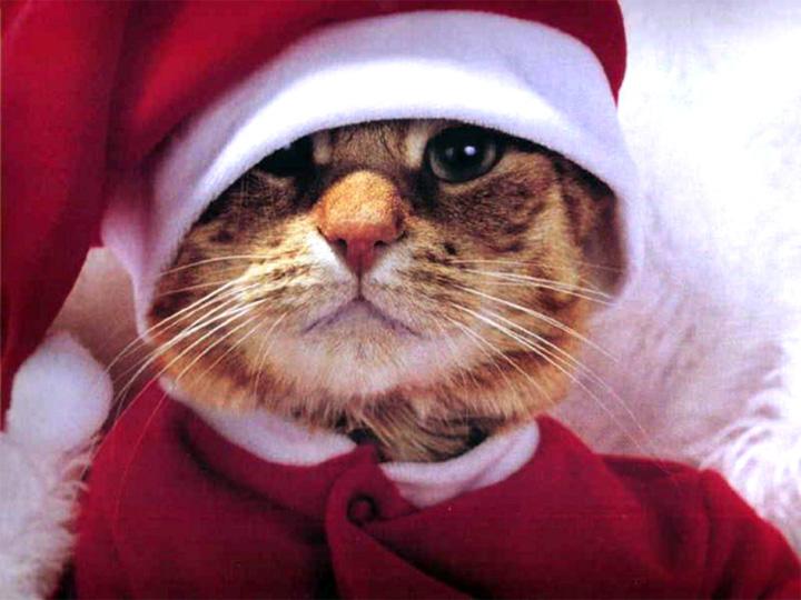картинки новогодних котов на аву напасти, постижение