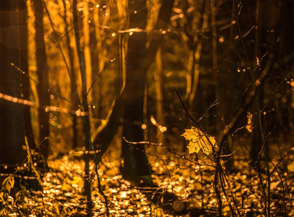 Осенняя ночь картинки и фотографии - очень красивые 13
