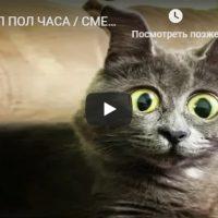 Смешные видео приколы недели до слез - забавная подборка №151