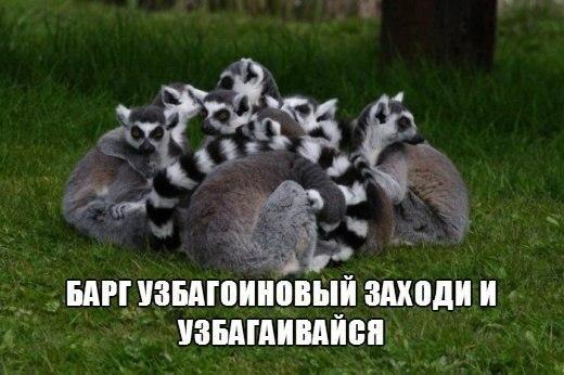 Смешные фотографии и картинки про зверей, животных до слез 12