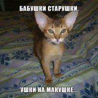 Смешные фотографии и картинки про зверей, животных до слез 13
