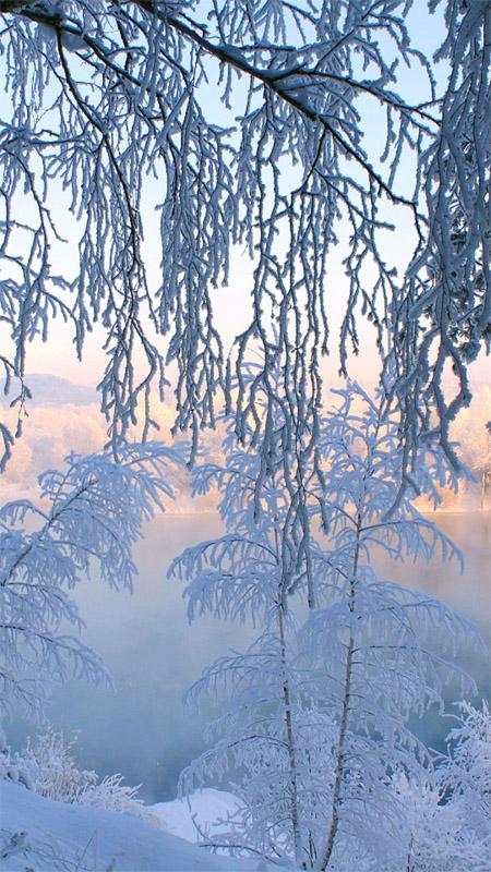 Удивительные картинки на заставку телефона Зима - подборка 6