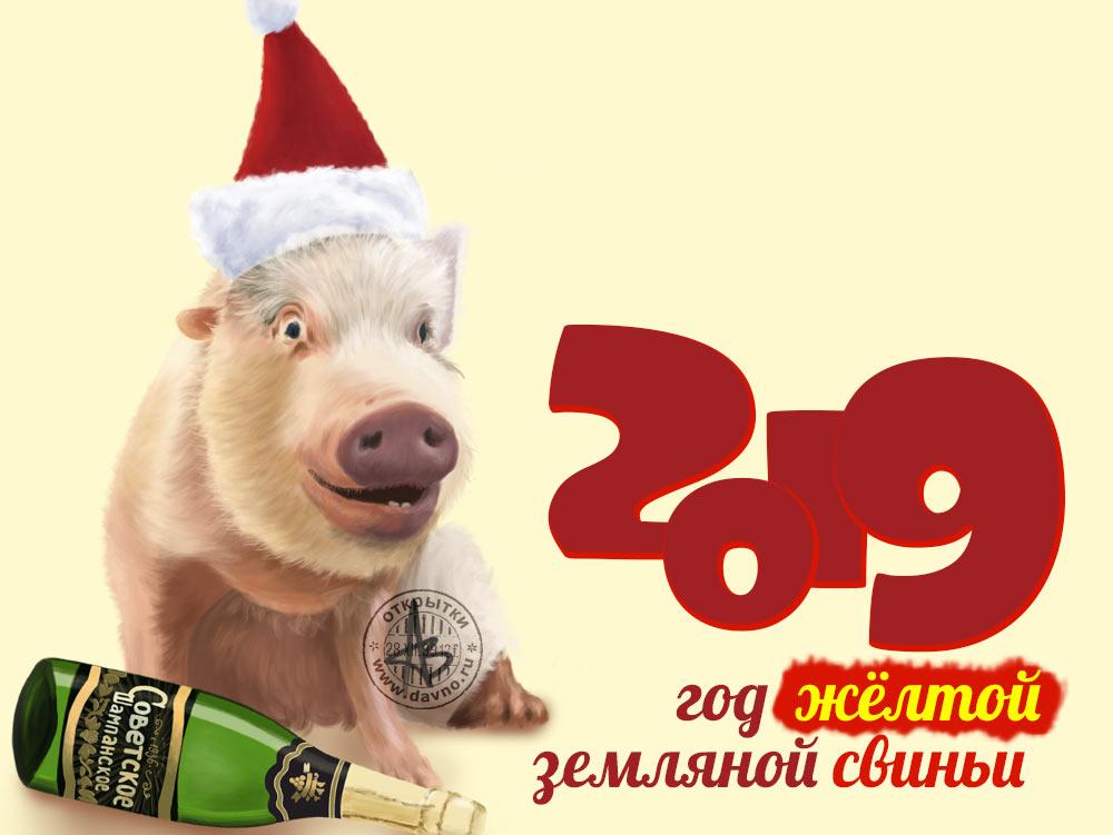 Интересные и прикольные картинки, фото свиньи на Новый год 2019 1