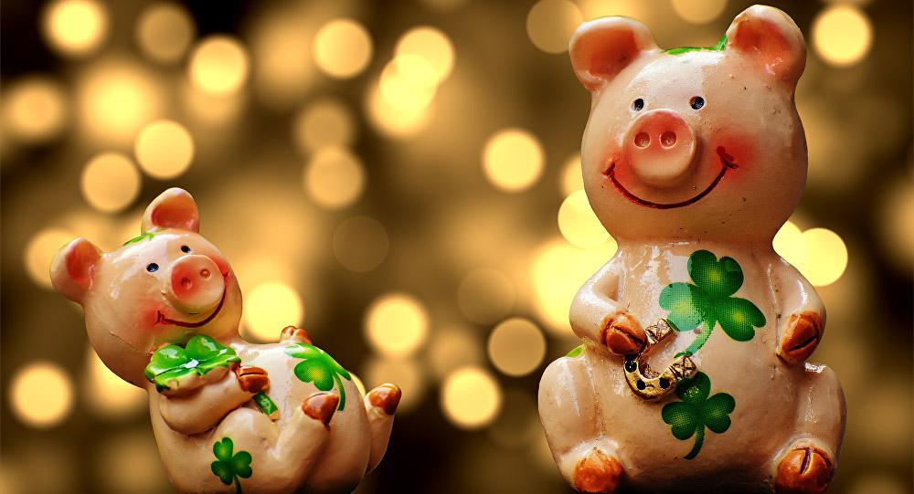 Интересные и прикольные картинки, фото свиньи на Новый год 2019 6