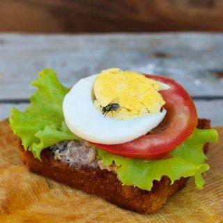 Как мухи заражают нашу еду Заражение продуктов мухами 1
