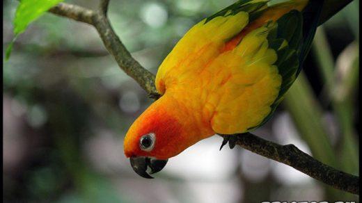 Как самому подрезать клюв и когти попугаю в домашних условиях 2