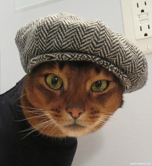 Классные картинки и фотки в шапке на аву, аватарку - подборка 7
