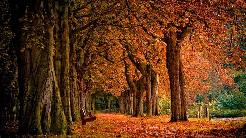 Красивые и невероятные картинки листьев, растений, зелени 11
