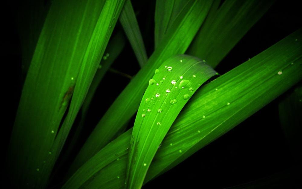 Красивые и невероятные картинки листьев, растений, зелени 2