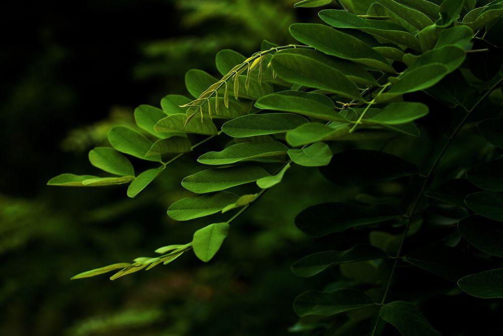 Красивые и невероятные картинки листьев, растений, зелени 5