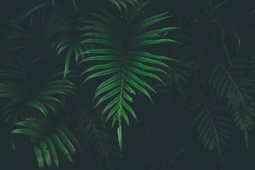 Красивые и невероятные картинки листьев, растений, зелени 8