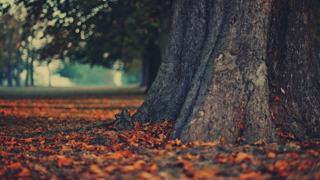 Красивые и невероятные картинки листьев, растений, зелени 9