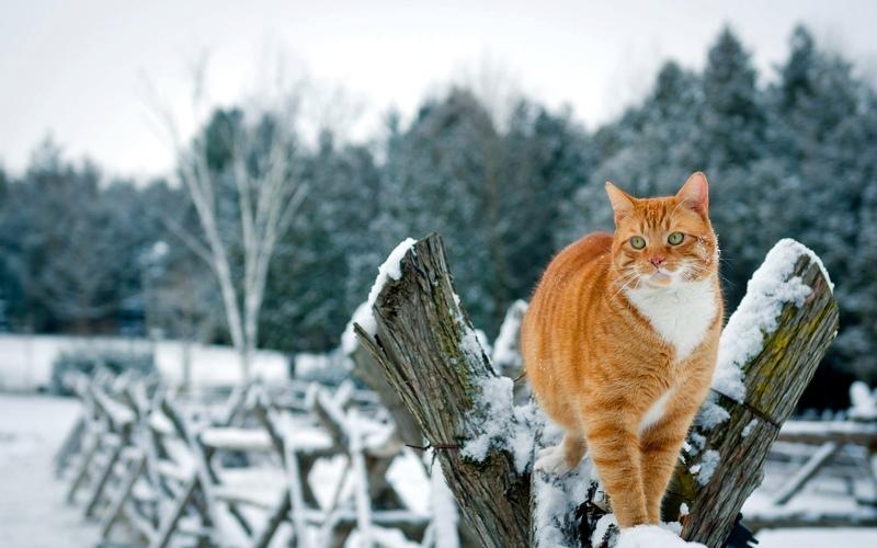 Красивые картинки котиков и кошек зимой в снег и Новый год 10