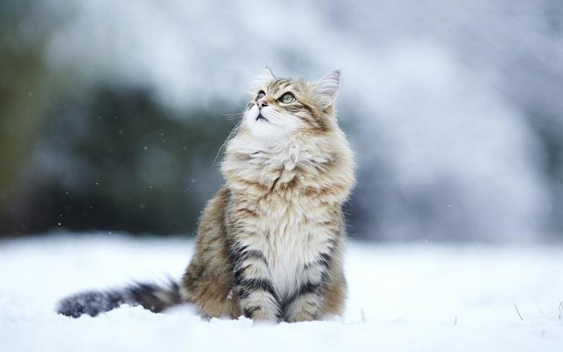 Красивые картинки котиков и кошек зимой в снег и Новый год 19
