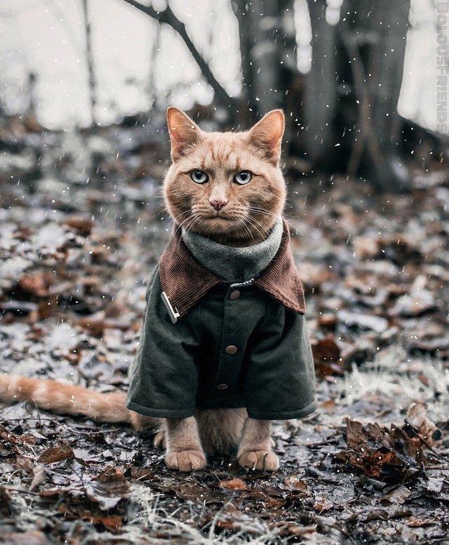 Красивые картинки котиков и кошек зимой в снег и Новый год 3