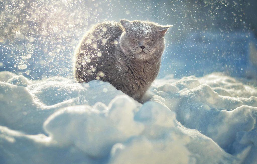Красивые картинки котиков и кошек зимой в снег и Новый год 9