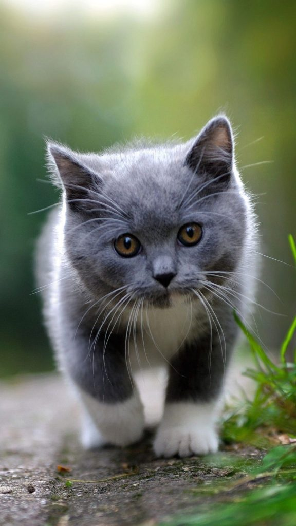 Красивые картинки на телефона на заставку кошки и котики - подборка 10