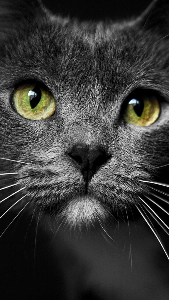 Красивые картинки на телефона на заставку кошки и котики - подборка 2