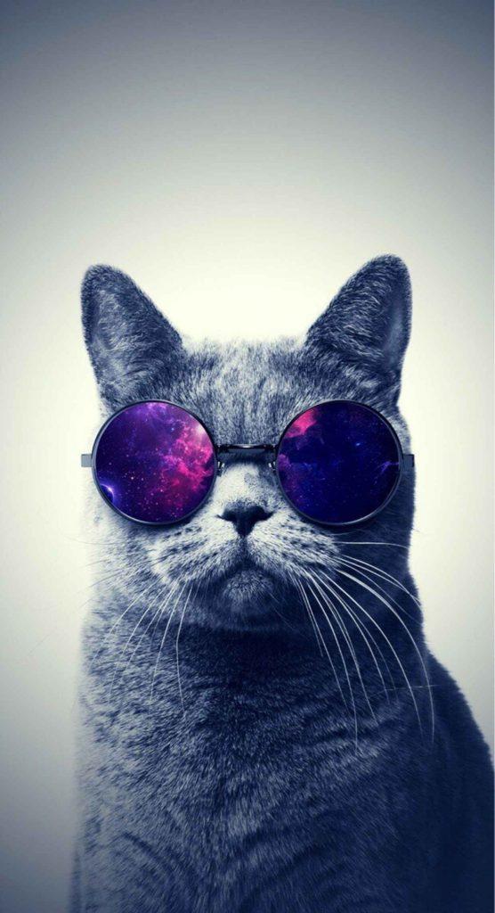 Красивые картинки на телефона на заставку кошки и котики - подборка 4