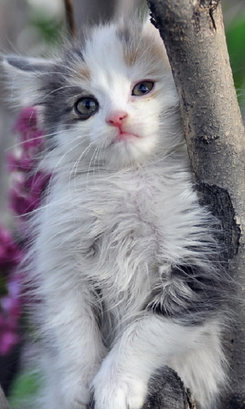 Красивые картинки на телефона на заставку кошки и котики - подборка 8