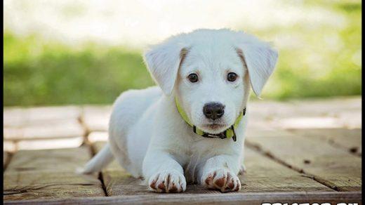 Можно ли заводить собаку, если дома есть ребенок 2