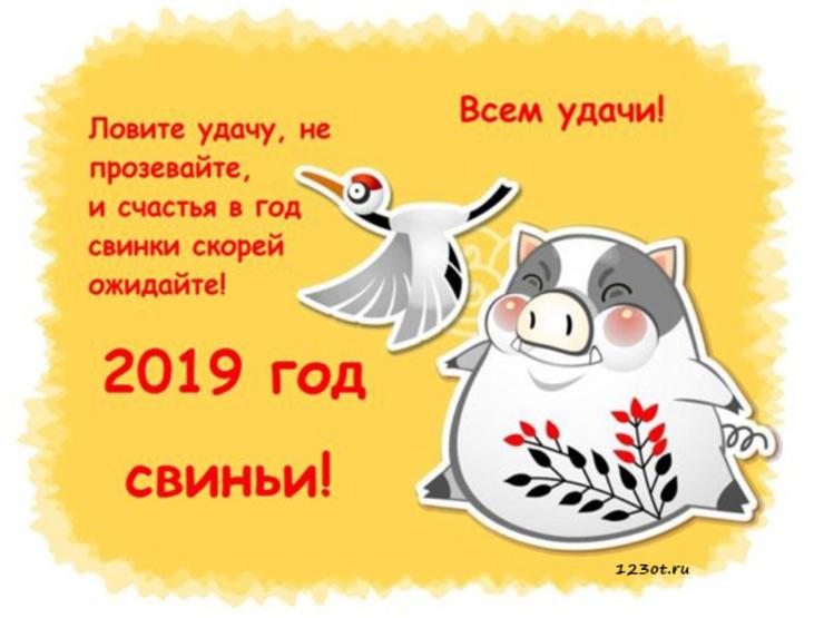 Новогодние открытки 2019 с изображением свиньи - поздравления 15