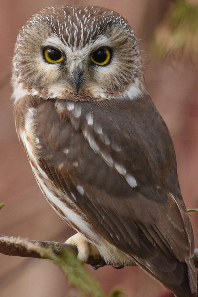 Красивые и классные картинки птиц на телефон на заставку - сборка 11
