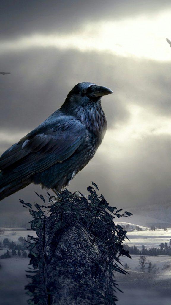 Красивые и классные картинки птиц на телефон на заставку - сборка 12