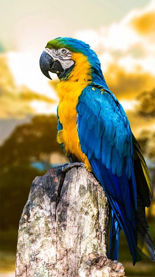 Красивые и классные картинки птиц на телефон на заставку - сборка 13