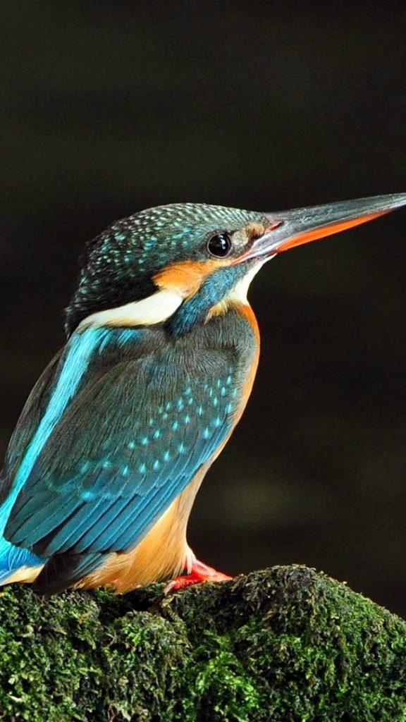 Красивые и классные картинки птиц на телефон на заставку - сборка 17