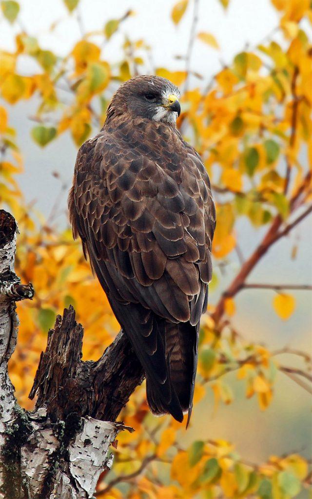 Красивые и классные картинки птиц на телефон на заставку - сборка 18