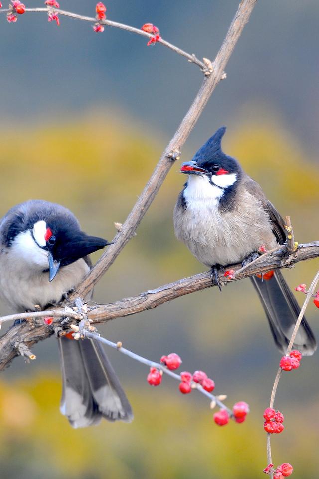 Красивые и классные картинки птиц на телефон на заставку - сборка 19