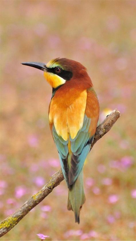 Красивые и классные картинки птиц на телефон на заставку - сборка 2