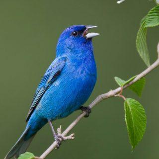 Красивые и классные картинки птиц на телефон на заставку - сборка 20