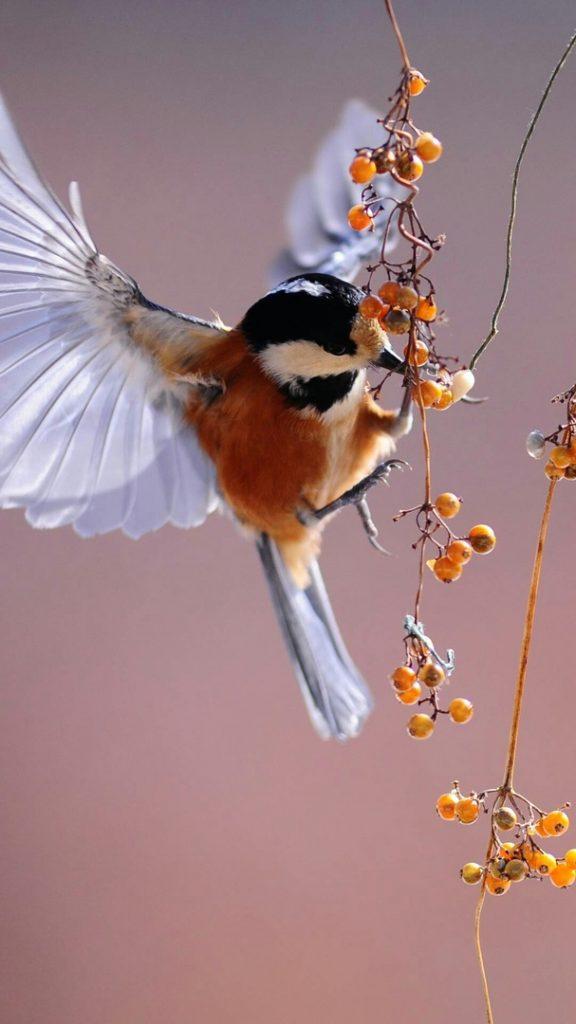 Красивые и классные картинки птиц на телефон на заставку - сборка 7