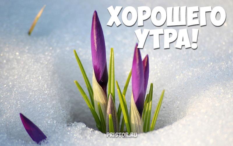 Красивые картинки С добрым утром, весна - приятные открытки 1