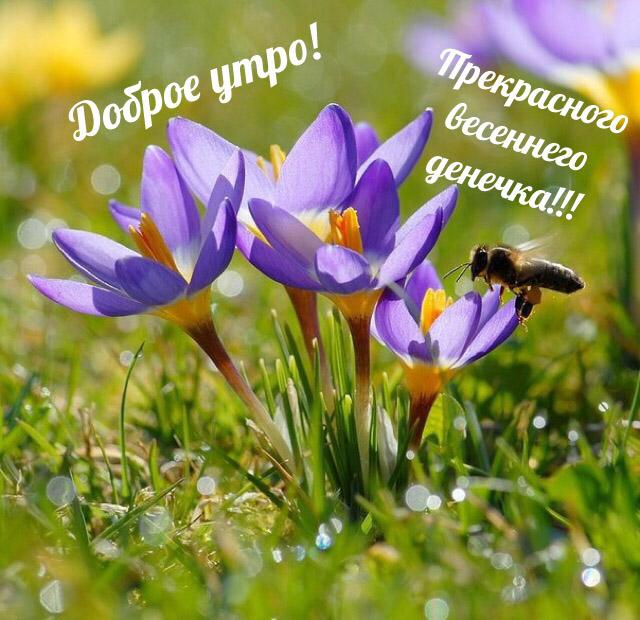 Красивые картинки С добрым утром, весна - приятные открытки 7