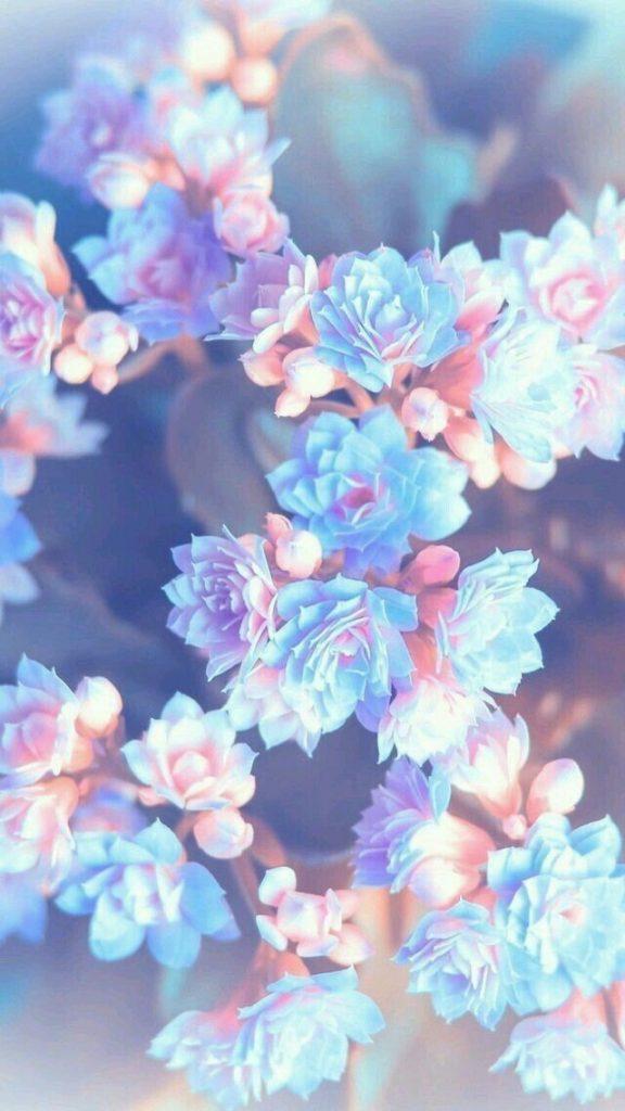 Красивые картинки на телефон цветы на главный экран - подборка  Обои на Телефон Цветы