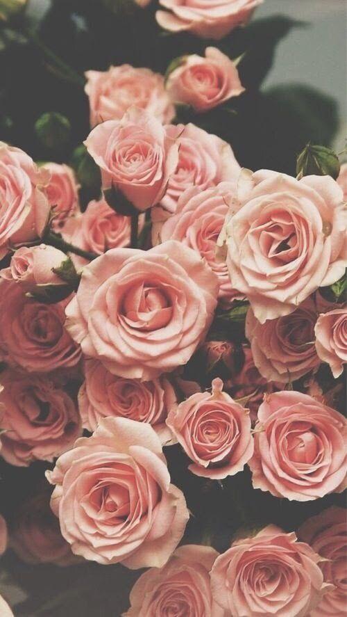 Красивые картинки на телефон цветы на главный экран - подборка 15