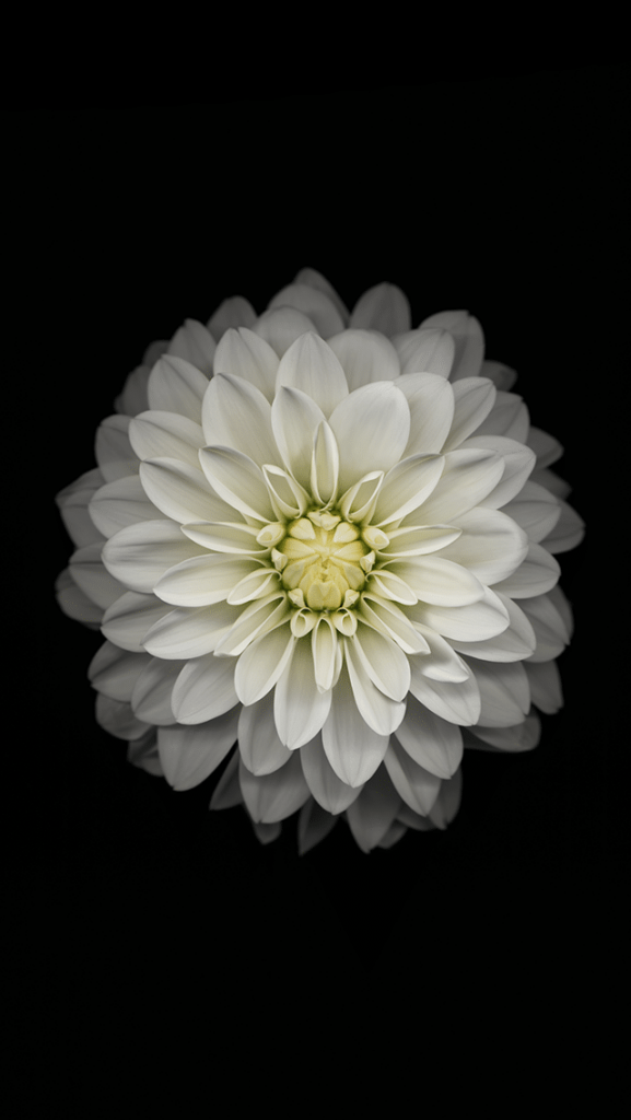 Красивые картинки на телефон цветы на главный экран - подборка 16