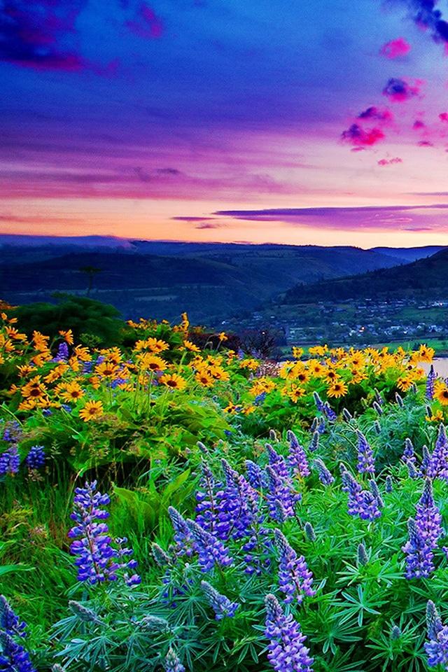 Красивые картинки на телефон цветы на главный экран - подборка 18