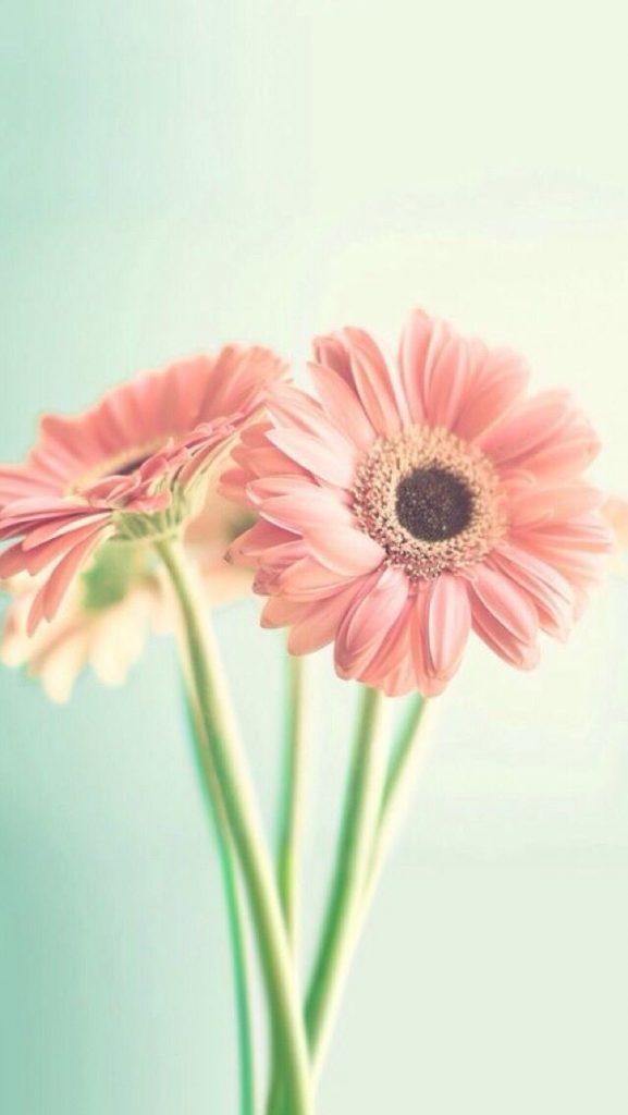 Красивые картинки на телефон цветы на главный экран - подборка 9