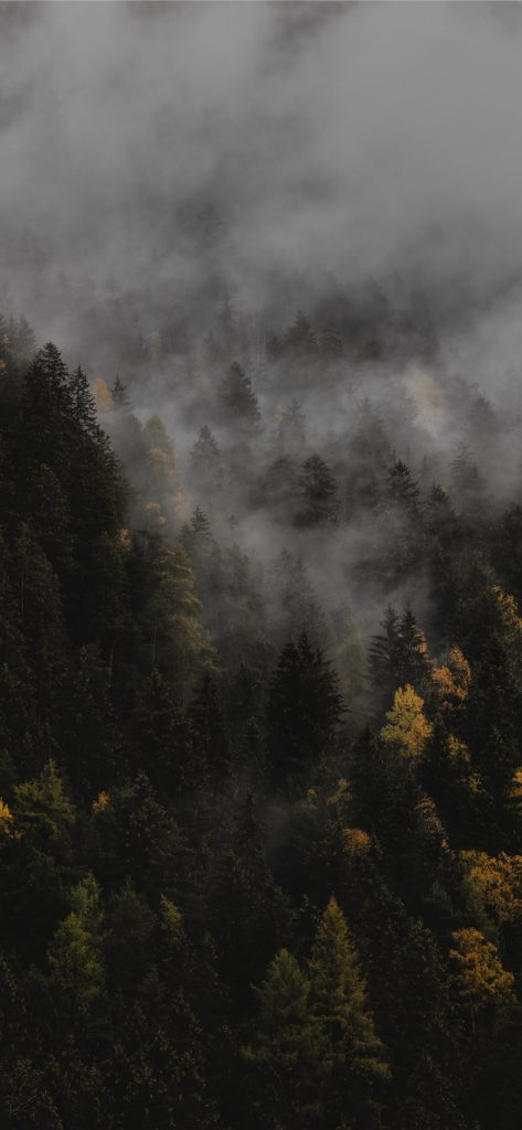 Красивые обои пейзажей для заставки телефона или смартфона 12