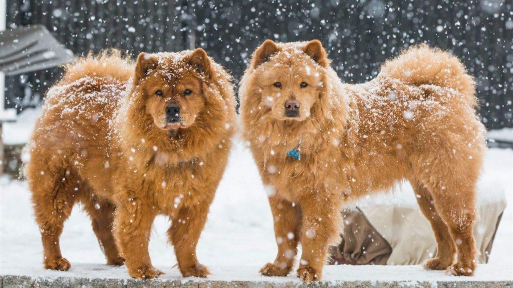 Падающий снег - красивые картинки и обои на рабочий стол 9
