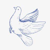 Прикольные и красивые картинки Голубь мира - подборка 10