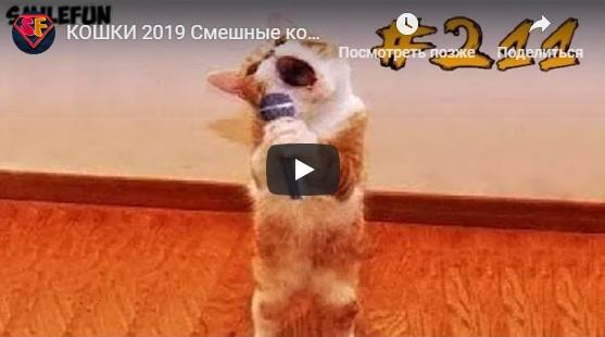 Смешные и ржачные видео приколы за январь 2019 год
