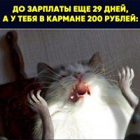 Смешные фото и картинки до слез с надписями - сборка №105 6